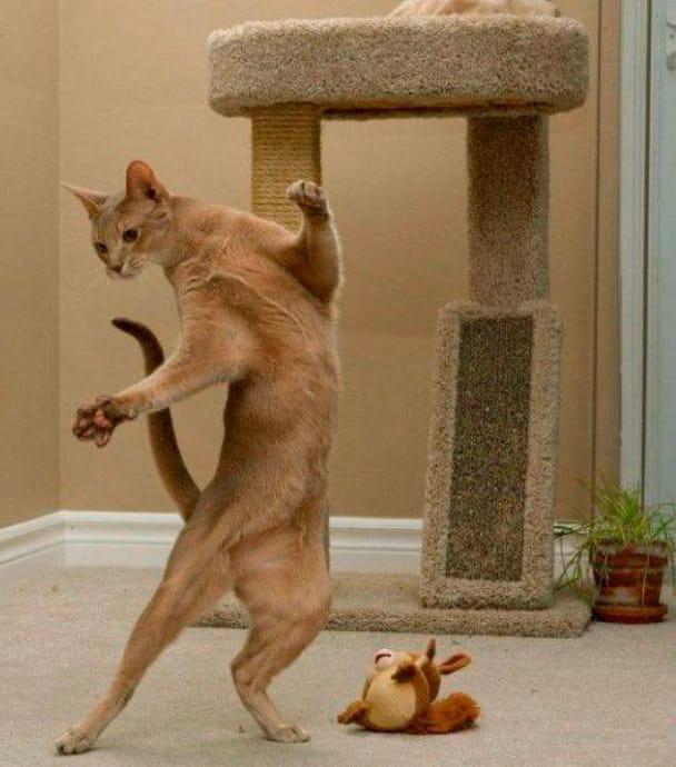Танцующая кошка